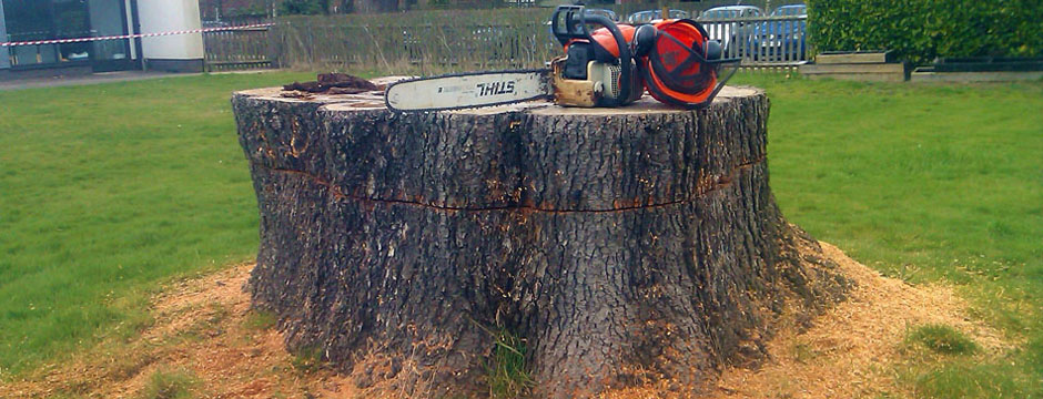 Chain saw and hard hat atop huge stump